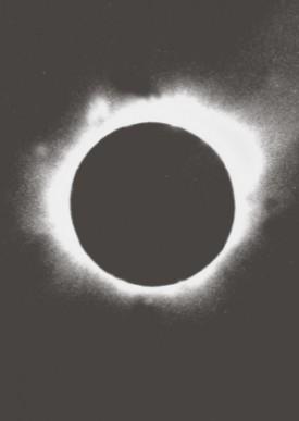 BlackSunflyer-A